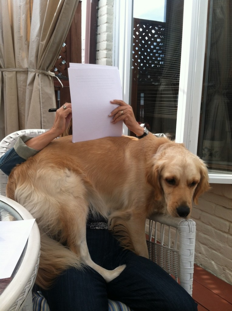 Things my dog taught me about writing